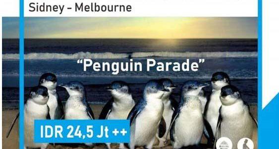 Wisata Halal Australia – Penguin Parade 2019