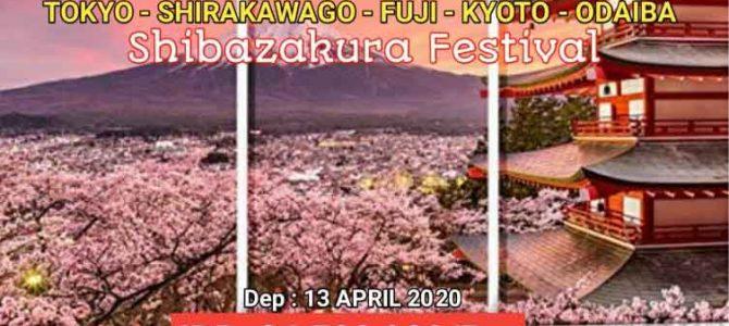 Wisata Halal Jepang – Festival Shibazakura 2020